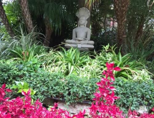 Patanjali's Eighth Limb of Yoga–Transcendence or Samadhi